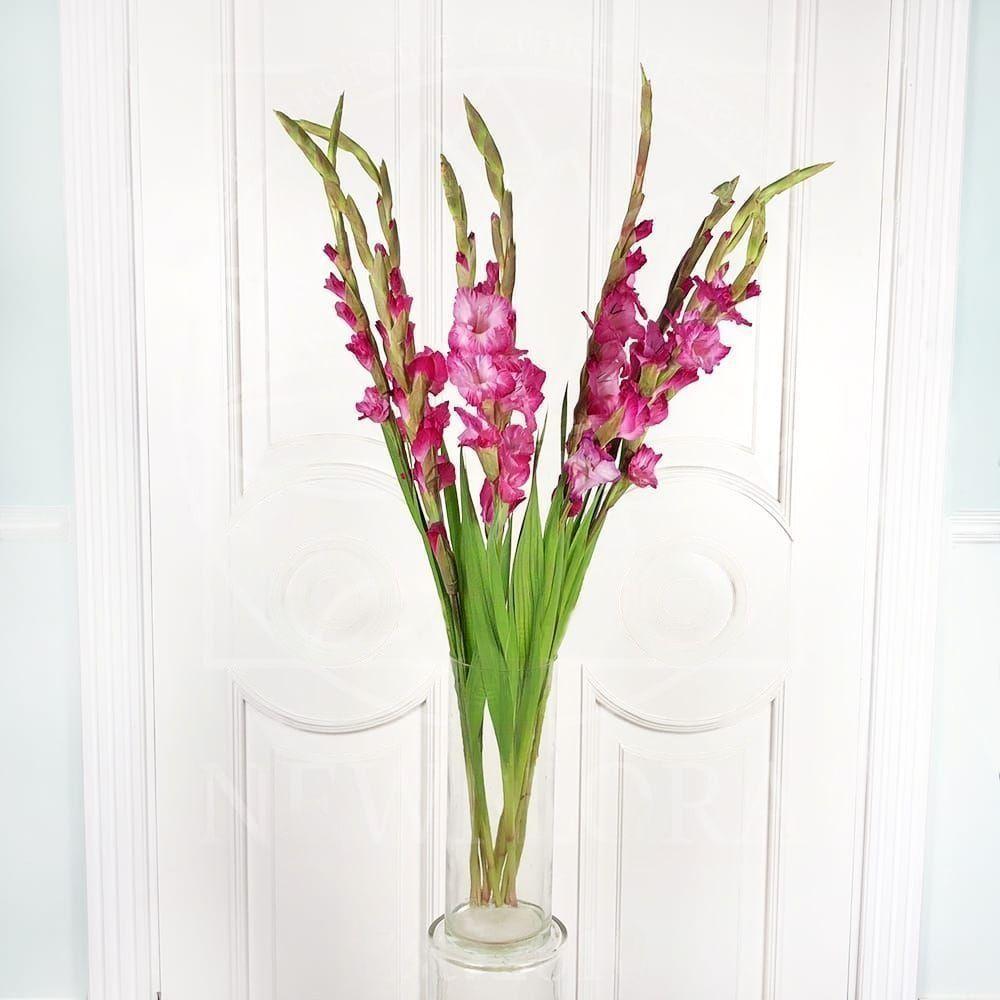 Букет 9 розовых гладиолусов