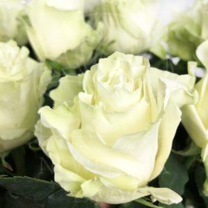 Букет 19 белых роз высотой 100см
