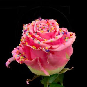 Роза натуральная восковая десерт #1
