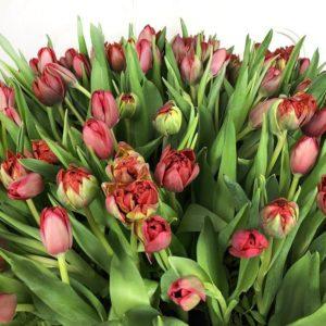 Огромная корзина цветов 201 тюльпан 75×75см