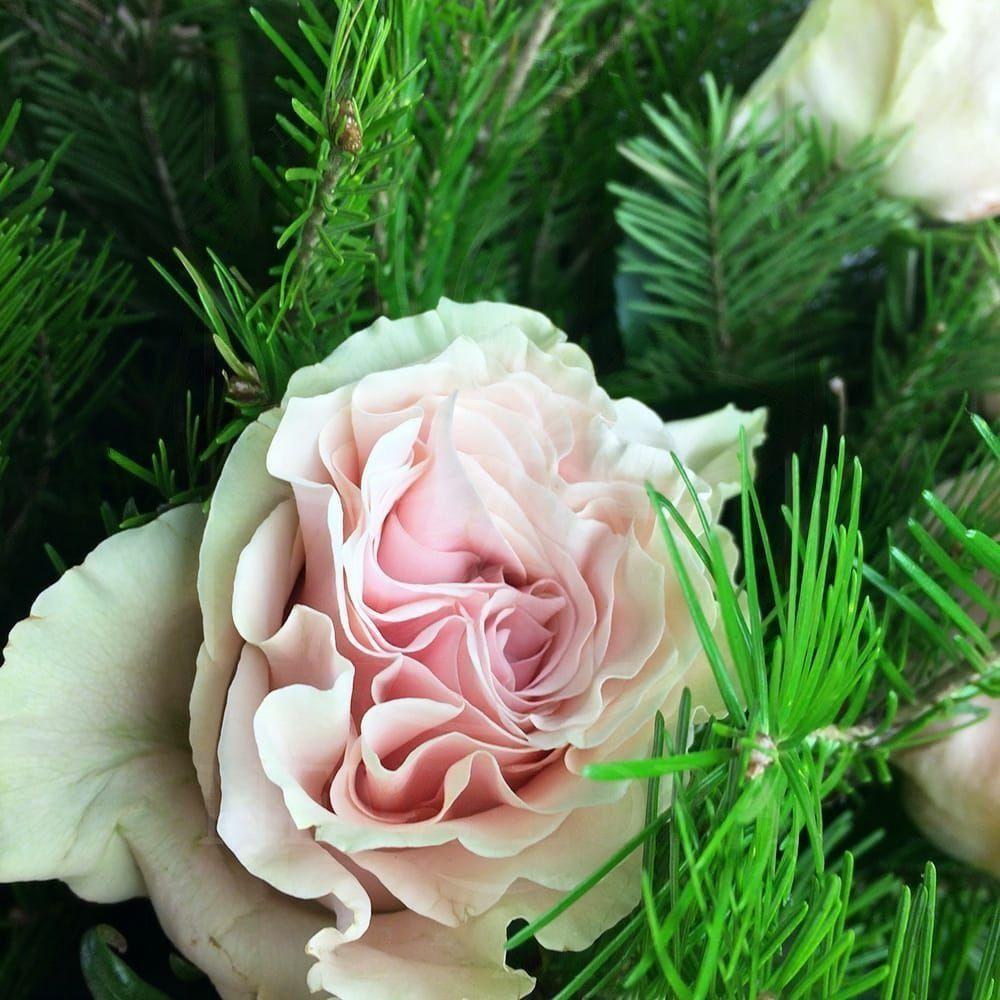 Букет 21 бело-розовая роза с лапником пихты