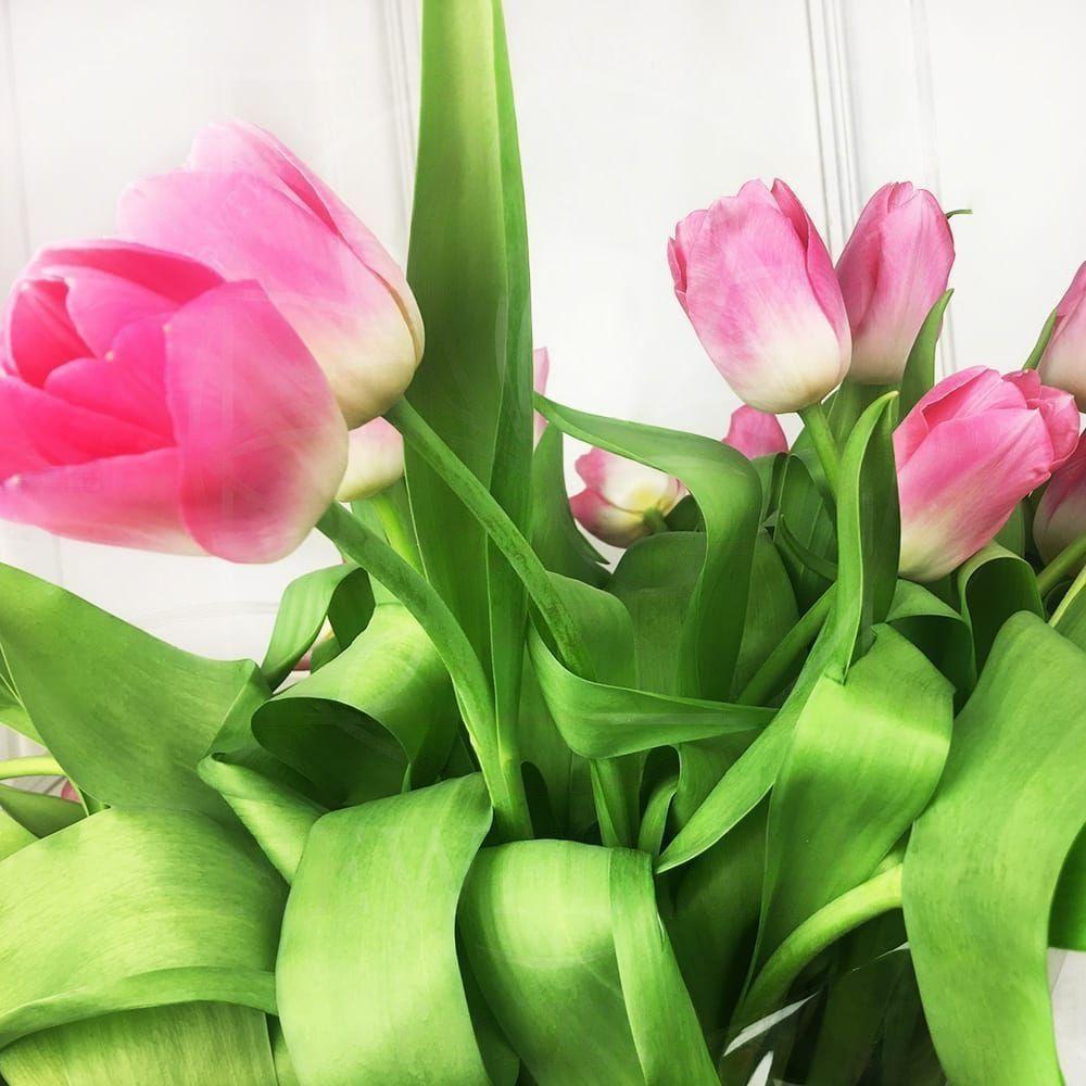 Букет 25 высоких розовых тюльпанов с луковицей (от 60см)
