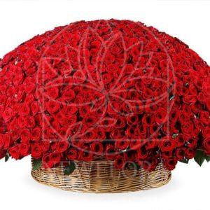 Огромная корзина цветов 501 красная роза