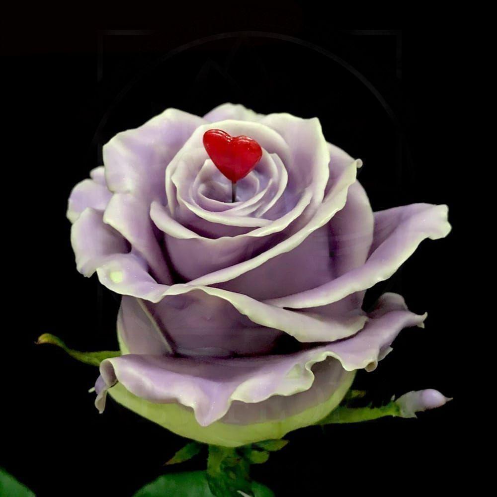 Роза натуральная восковая сердечко #3