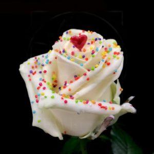 Роза натуральная восковая сердечко #8