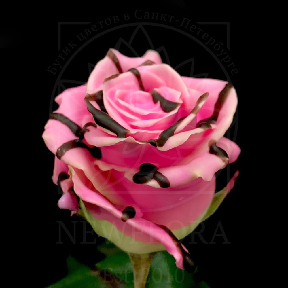Роза натуральная восковая десерт #3