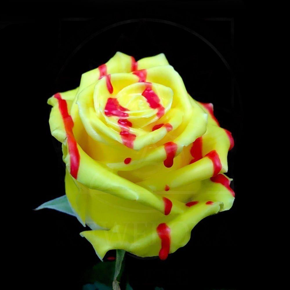 Роза натуральная восковая десерт #4