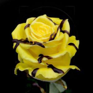 Роза натуральная восковая десерт #6