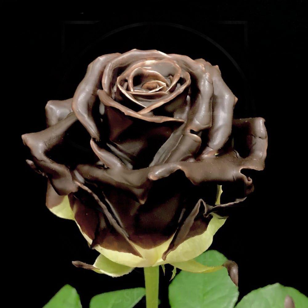 Роза натуральная восковая шоколадная