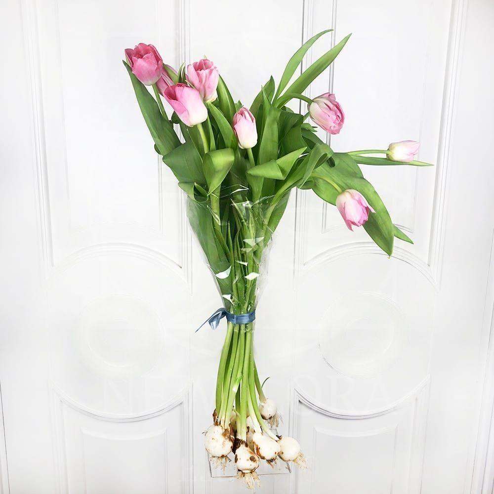 Розовые высокие тюльпаны гиганты с луковицей (от 60см)