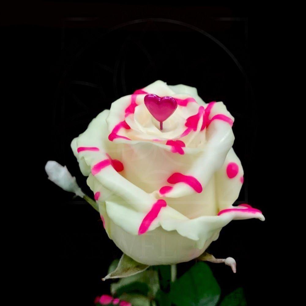Роза натуральная восковая сердечко #6
