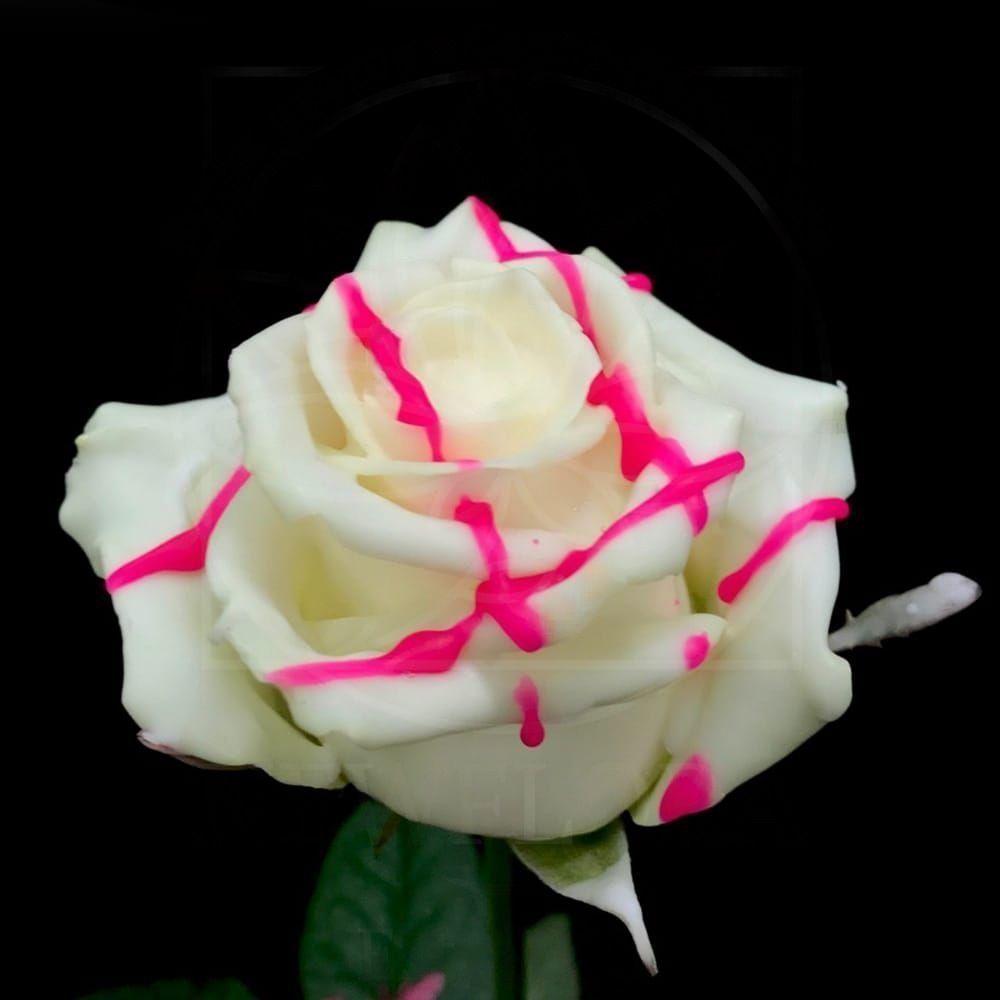 Роза натуральная восковая десерт #8