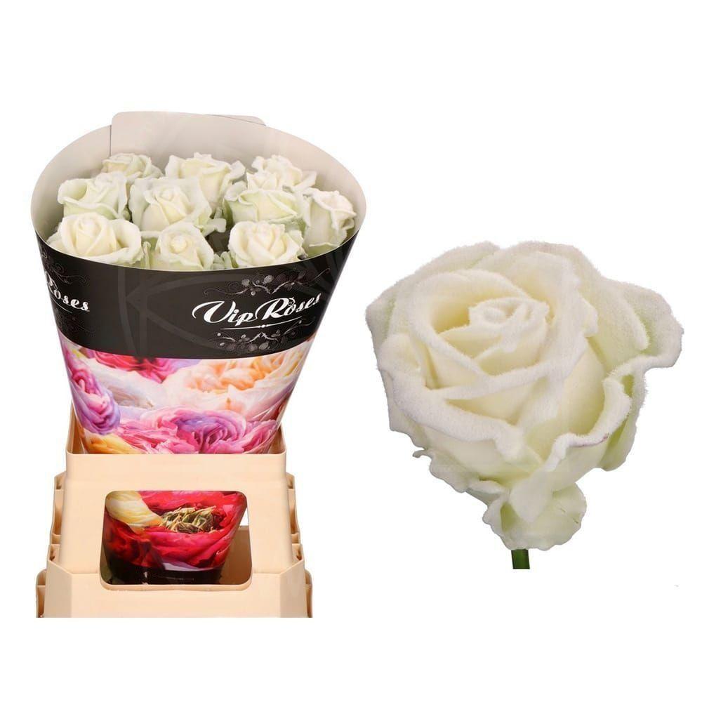 Роза натуральная восковая вельвет #4
