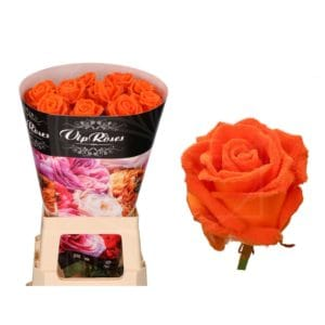 Роза натуральная восковая вельвет #6