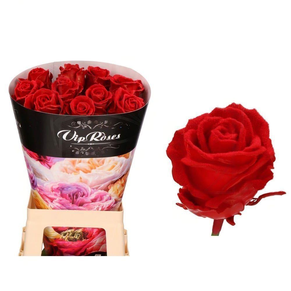 Роза натуральная восковая вельвет #7
