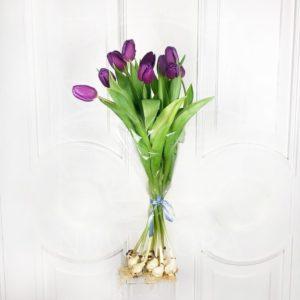 Фиолетовые высокие тюльпаны гиганты с луковицей (от 60см)