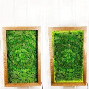 Картина из стабилизированного мха в дубовой раме с подсветкой 60×100см