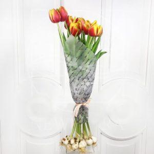 Тюльпан гигант с луковицей поштучно (цвет на выбор)