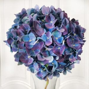 Фиолетовые гортензии поштучно (Premium)