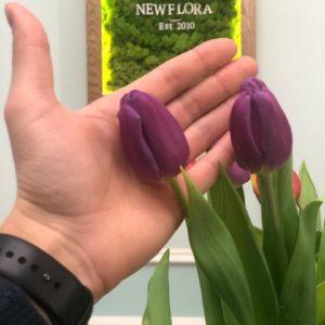 Высокие фиолетовые тюльпаны поштучно (от 50 см)