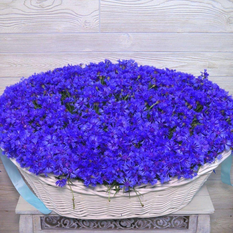 Доставка цветов по василькову, цветов