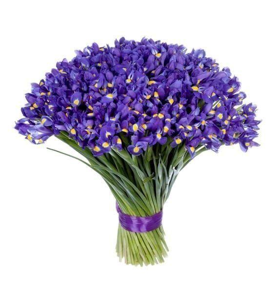 Букет 101 фиолетовый ирис