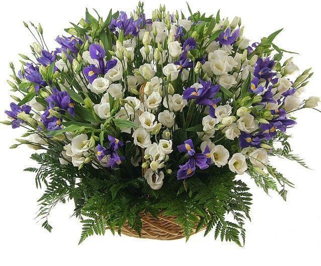 Корзина цветов 101 ирис и белый лизиантус (эустома)