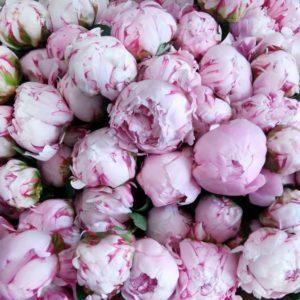 Букет 101 маленький розовый пион