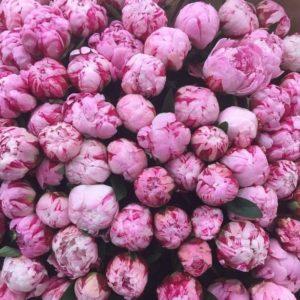 Букет 101 розовый пион Сара Бернар (sarah bernhardt)