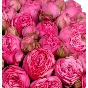 Букет 151 пионовидная роза Pink Piano