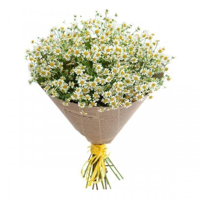 Зорро, заказ цветов в санкт-петербург ромашки