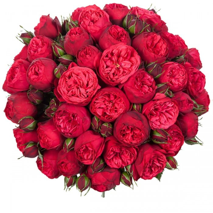 Букет 35 пионовидных красных роз Red Piano