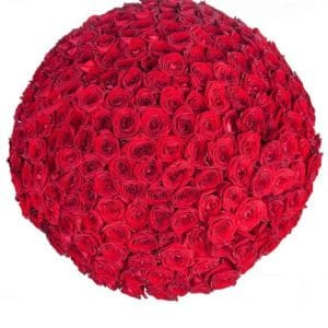 Букет 201 красная роза 70-80см (Юж. Америка)