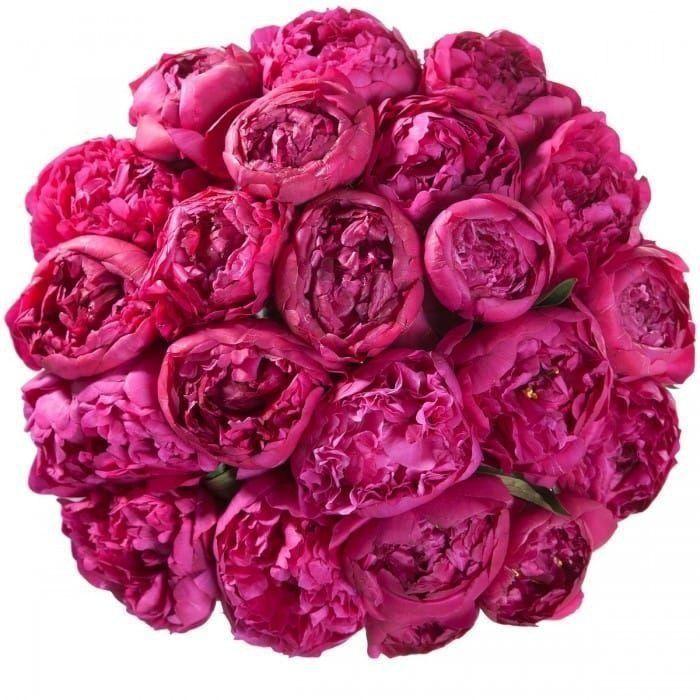 Букет 21 ярко розовый пион