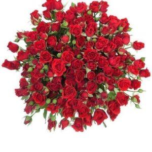 Букет 25 красных кустовых роз (60-70см)
