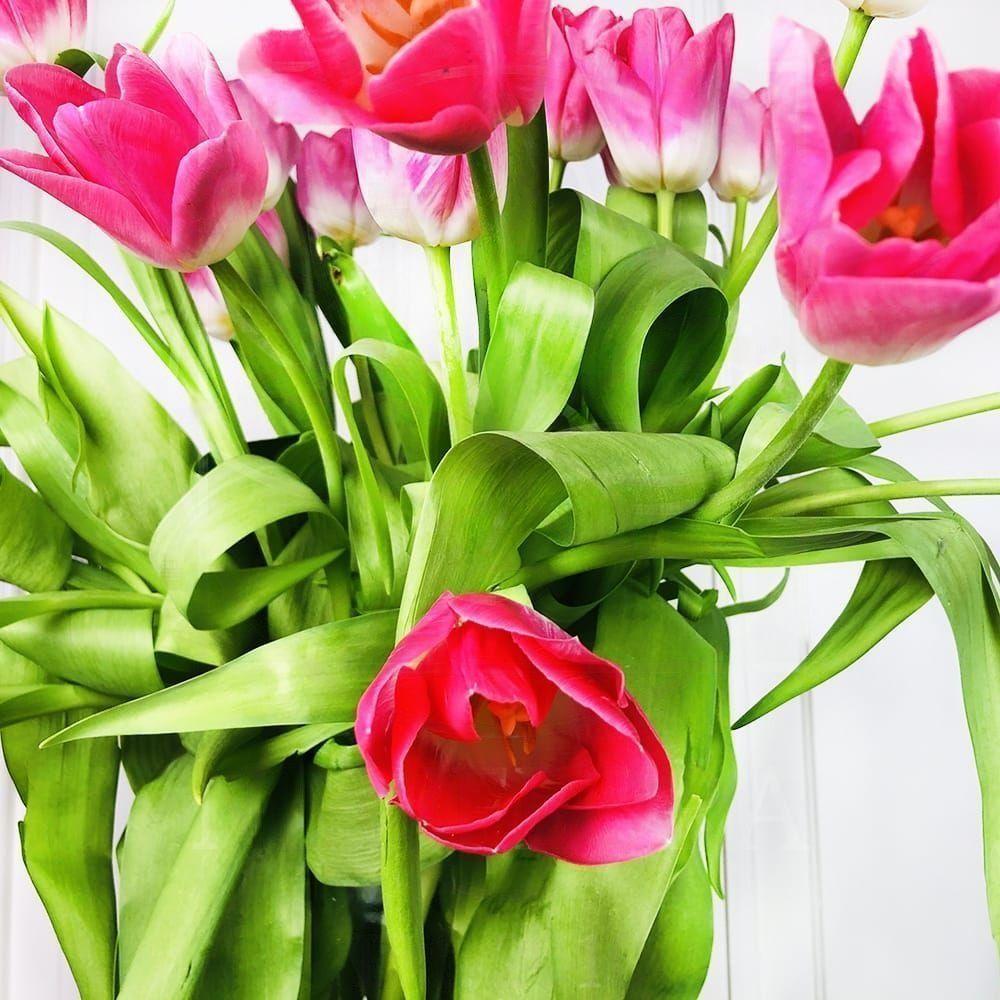 Букет 25 высоких розовых тюльпанов (65-75см)