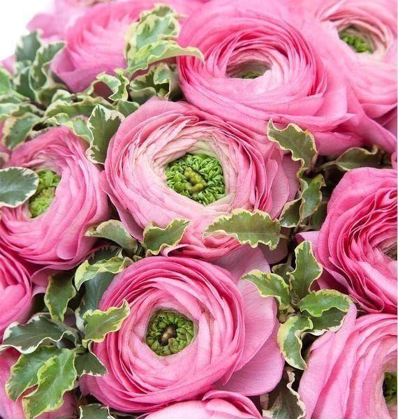 Цветы ранункулюсы купить в москве