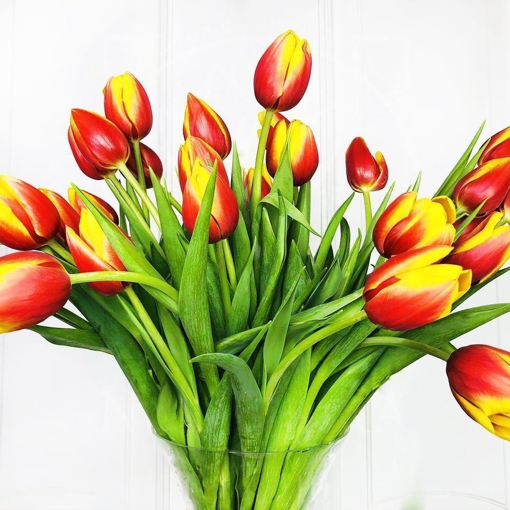 Букет 25 высоких персиковых тюльпанов (50-60см)