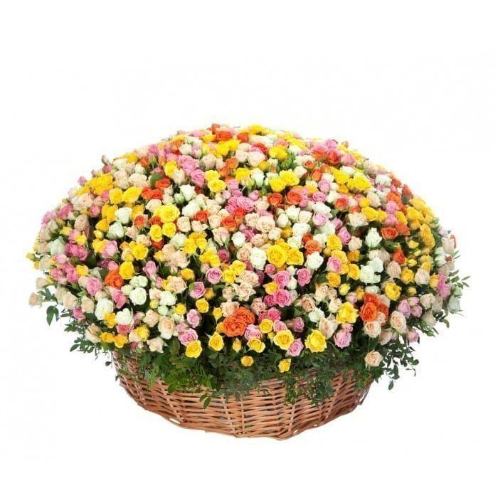 Продажа цветов спб недорого круглосуточно, голландии