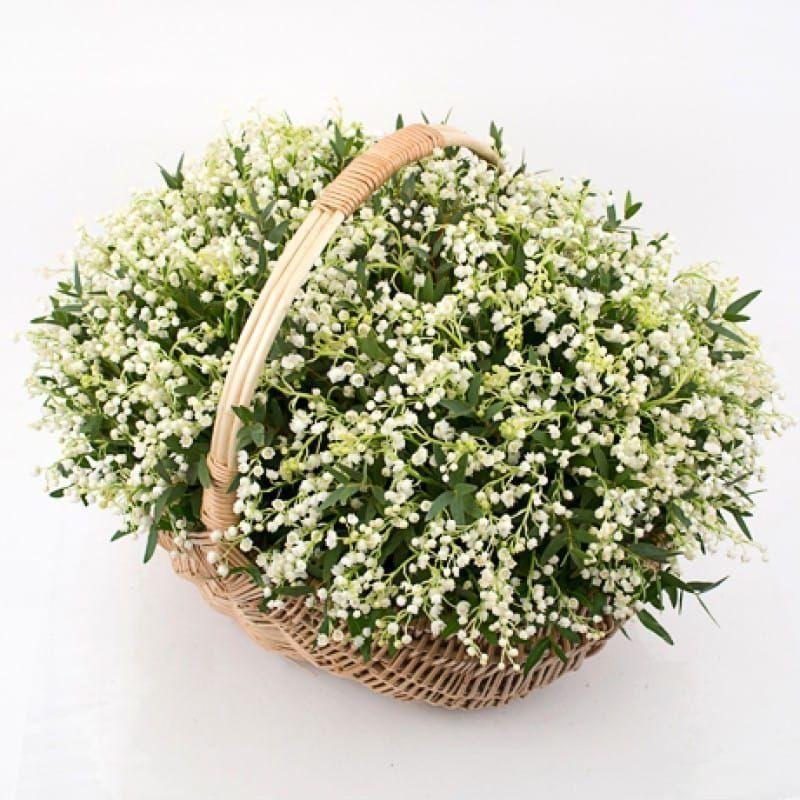 Корзина цветов 501 импортный ландыш без корней