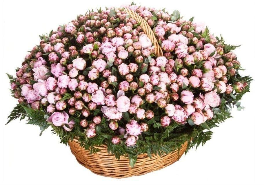 Букет пионов, купить шикарный букет цветов в спб