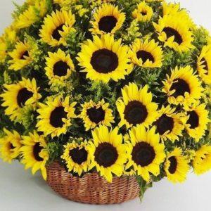 Корзина цветов 51 подсолнух и солидаго