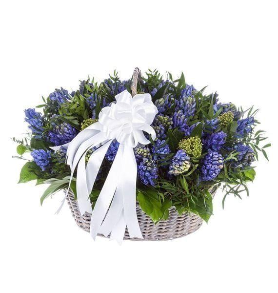 Корзина цветов 51 синий гиацинт с фисташкой и скиммия