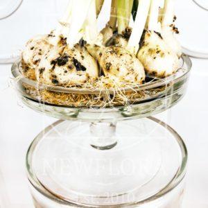 Ваза на ножке для тюльпанов с луковицей 16×12см