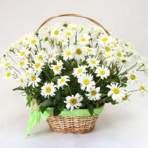 Корзина цветов 101 ромашка одноголовая с рускусом