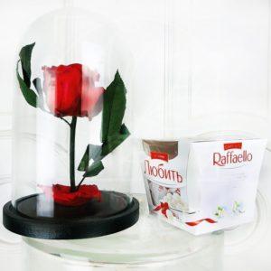 Набор raffaello (Раффаэлло) + средняя роза в колбе (цвет на выбор)