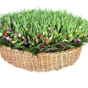 Огромная корзина цветов 1001 тюльпан