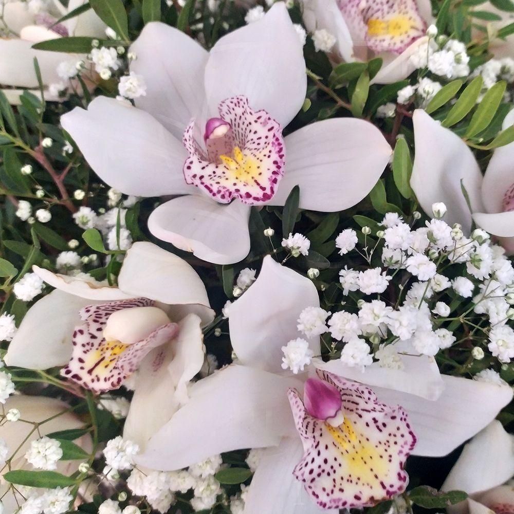 Корзина 25 белых орхидей (Premium) с зеленью