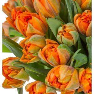 Букет 51 рыжий пионовидный тюльпан