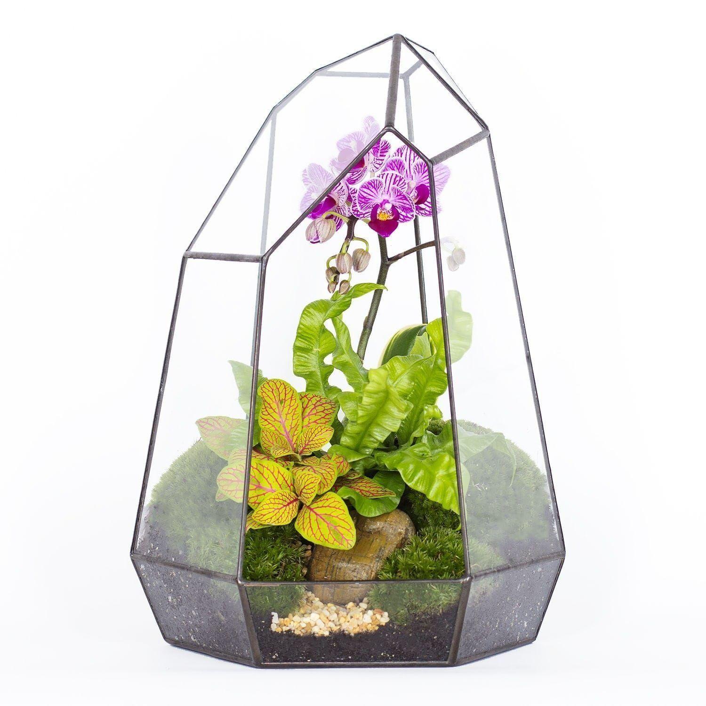 Флорариум с орхидеей, папоротником и стабилизированным мхом